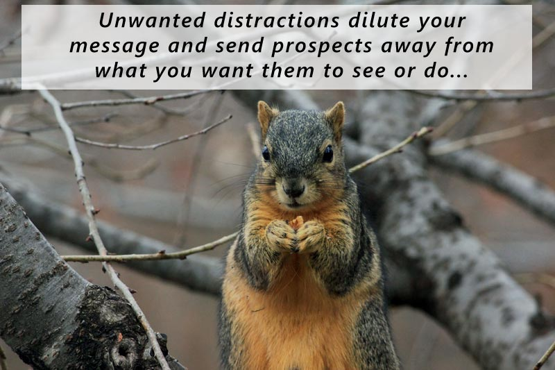 Unwanted distractions on your photographer bio page dilute your message and can send prospects away from what you want them to see or do...