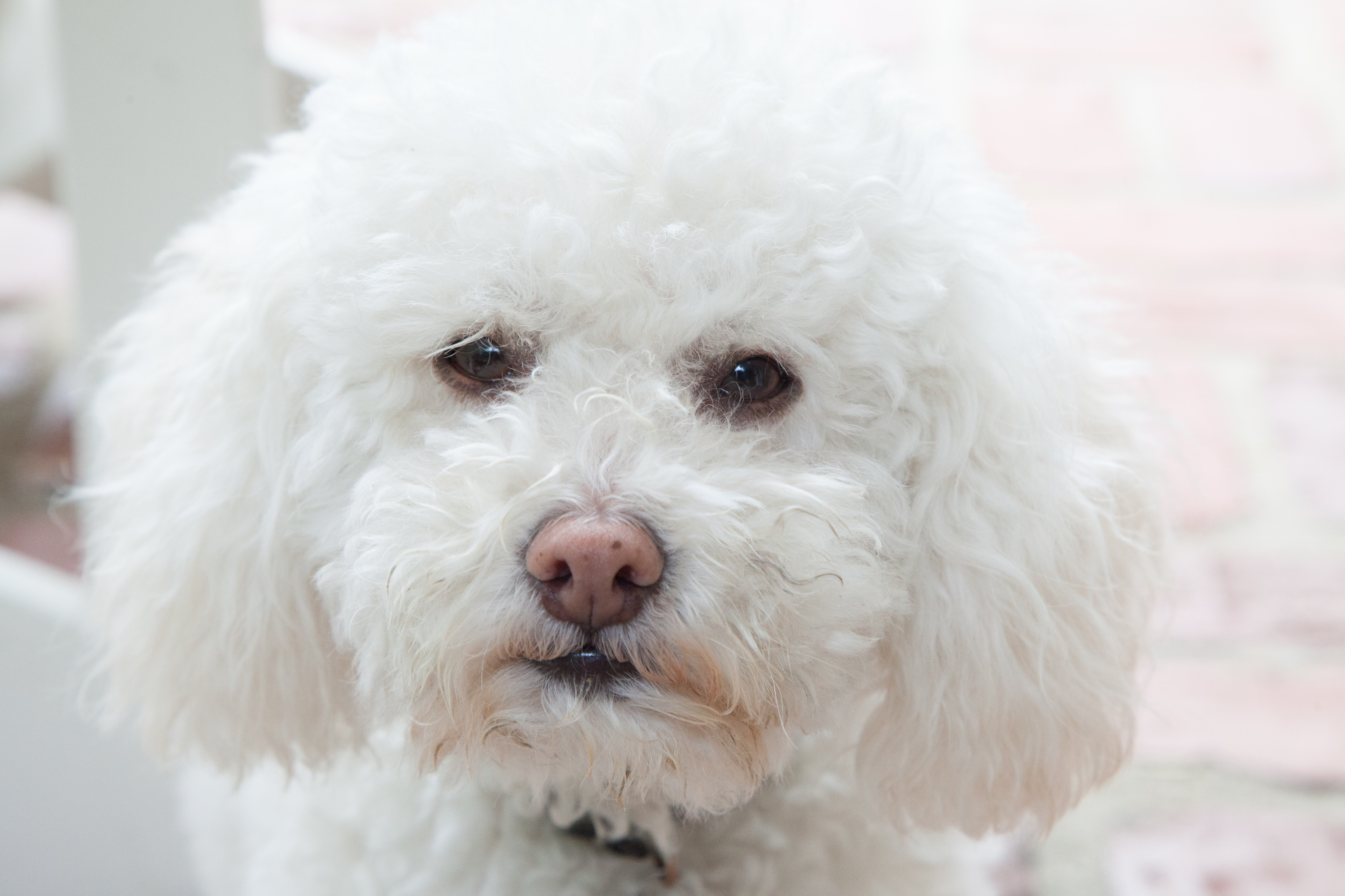 Causes Of Eye Tearing In Dogs