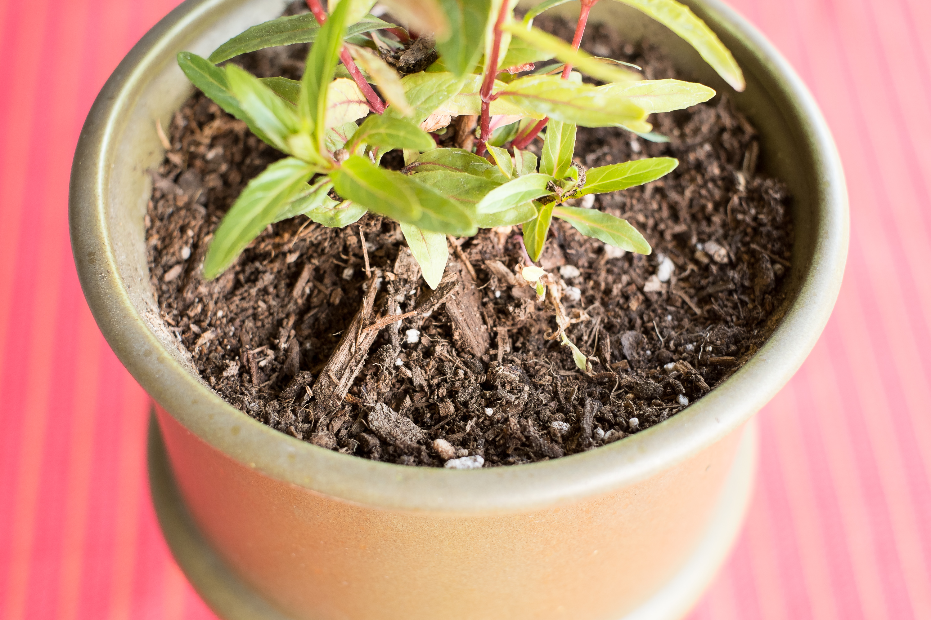 How To Get Rid Of Plant Gnats Naturally
