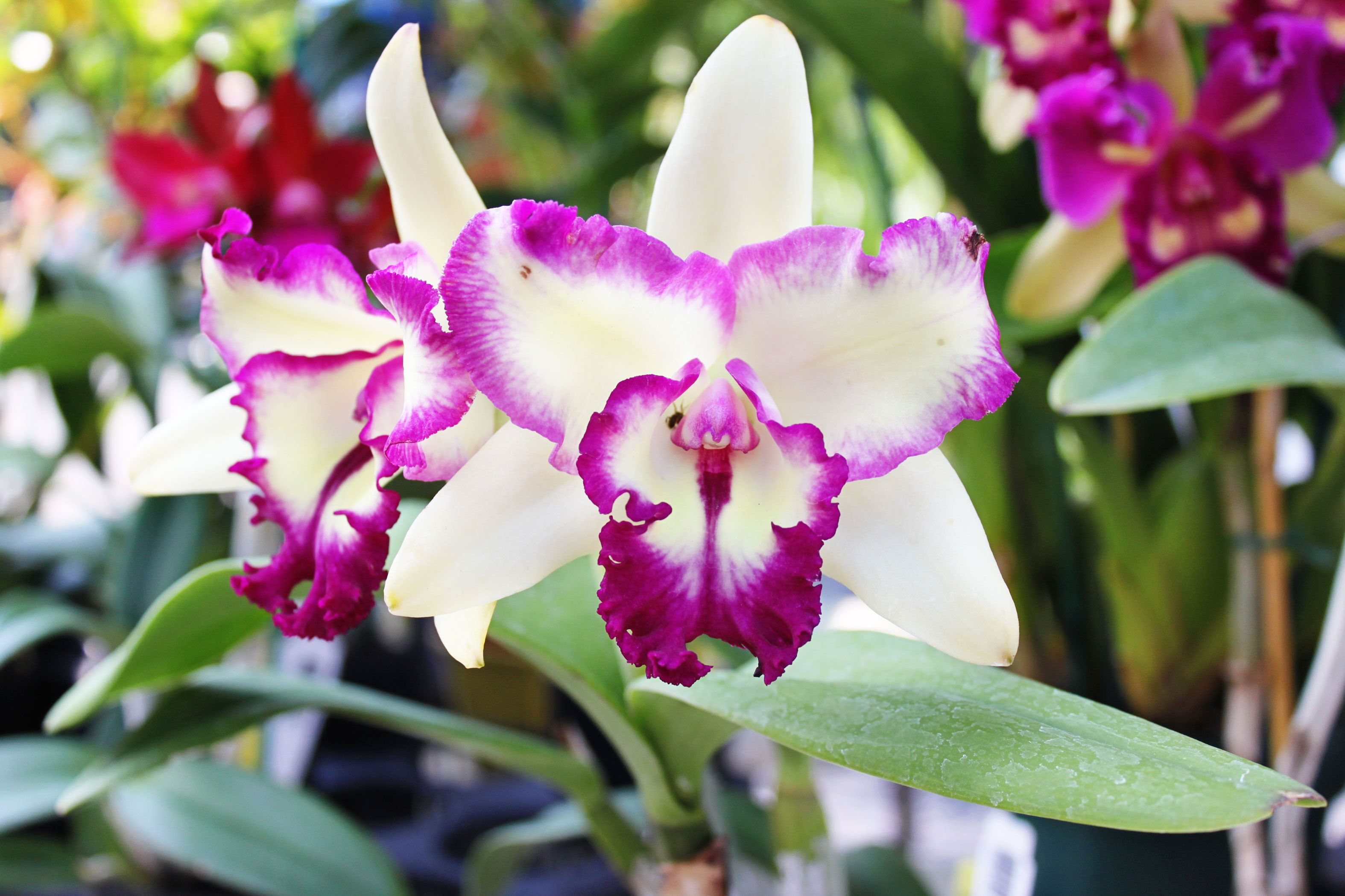 Homemade Orchid Fertilizer Recipes | Hunker