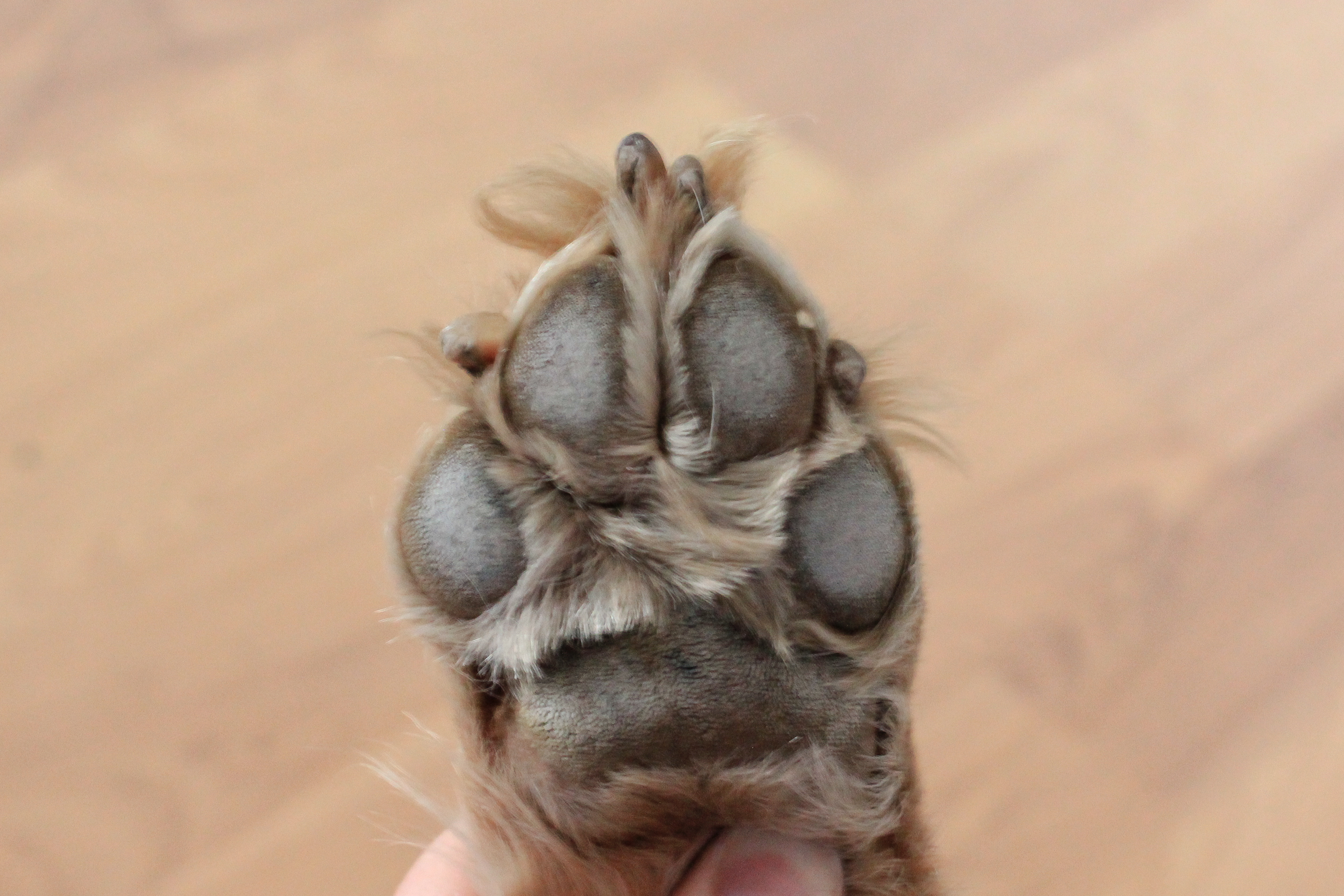 How To Treat Dog Paws