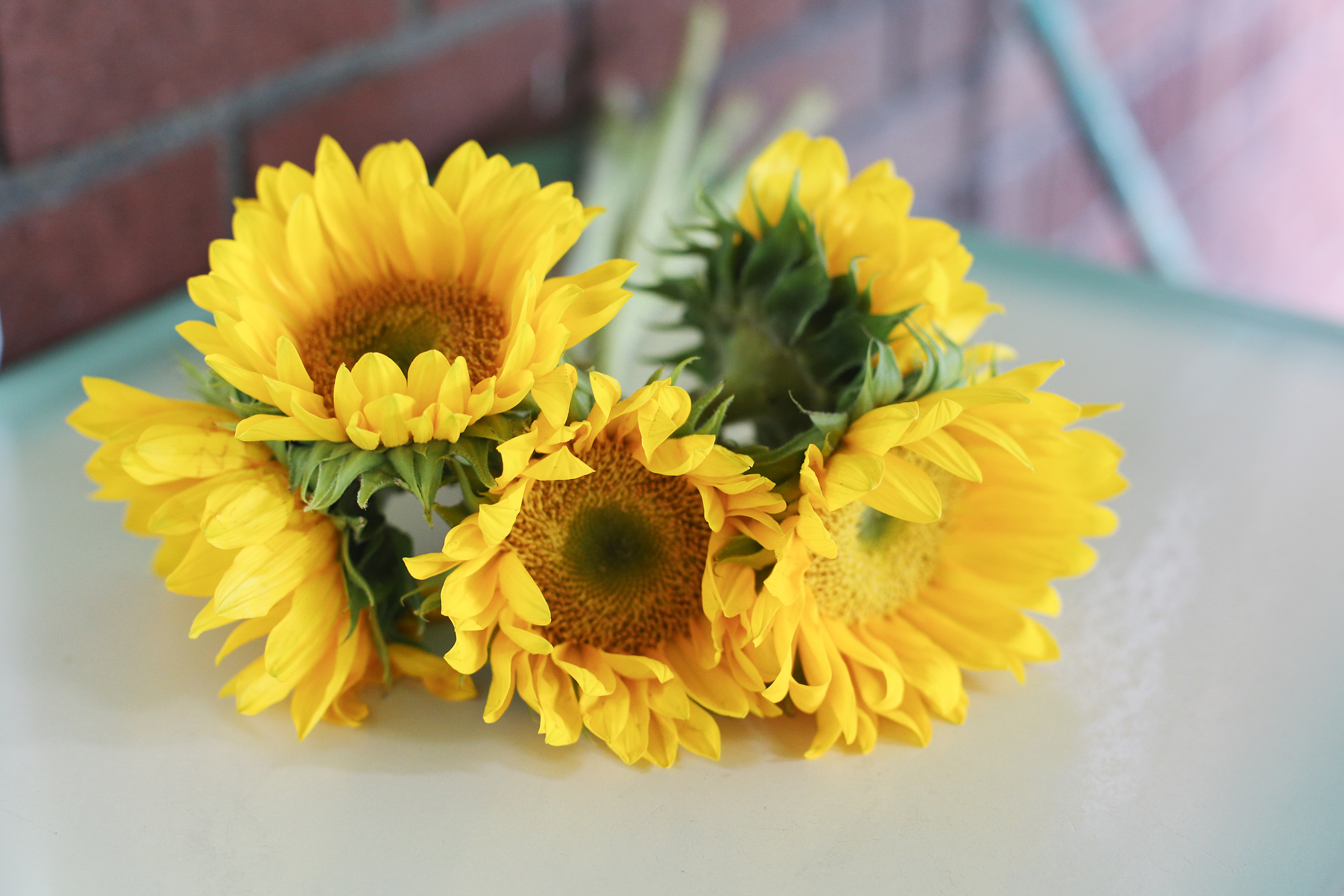 What Should You Do With Sunflowers After They Bloom? | Hunker