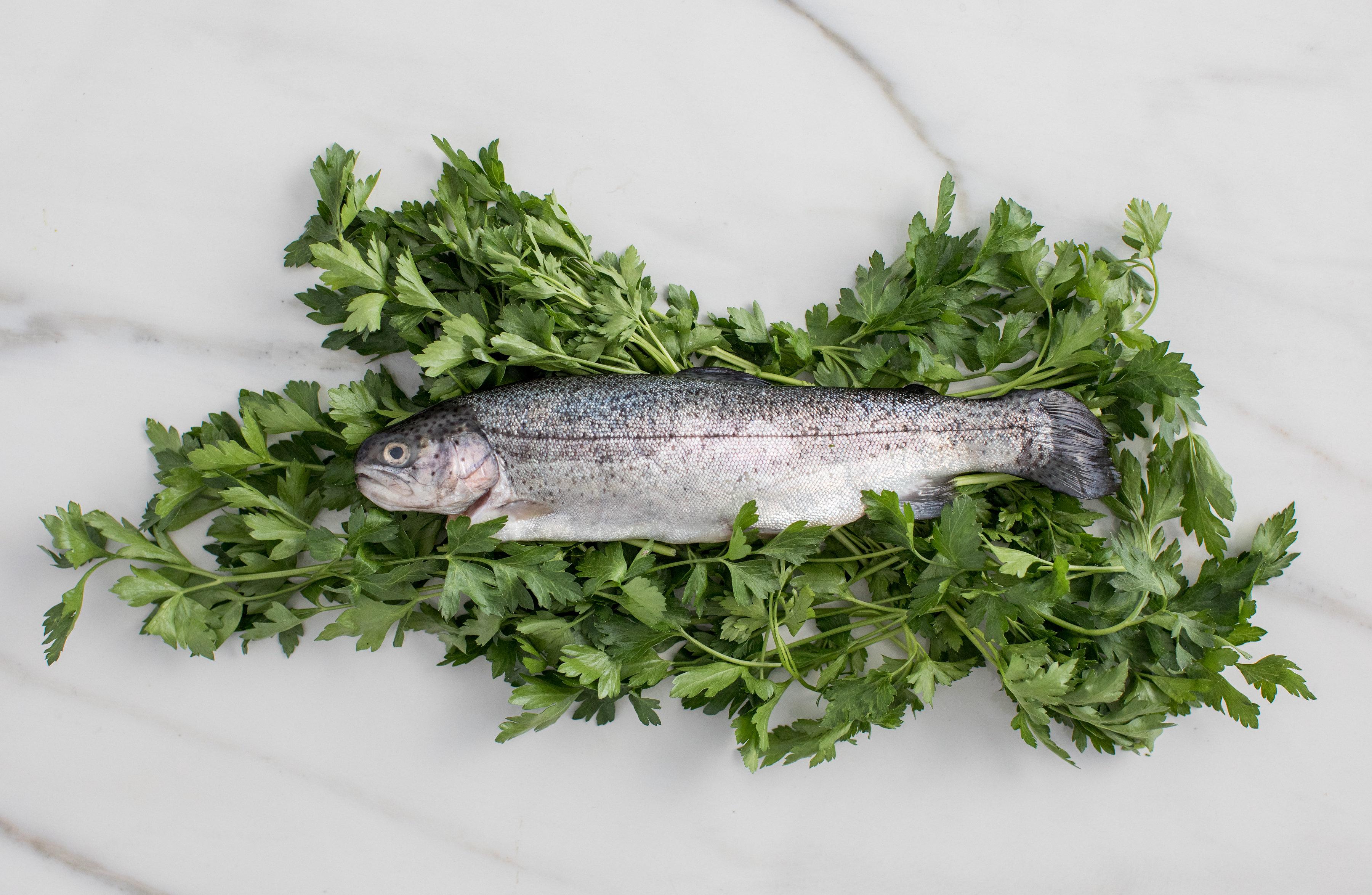 fish on greens