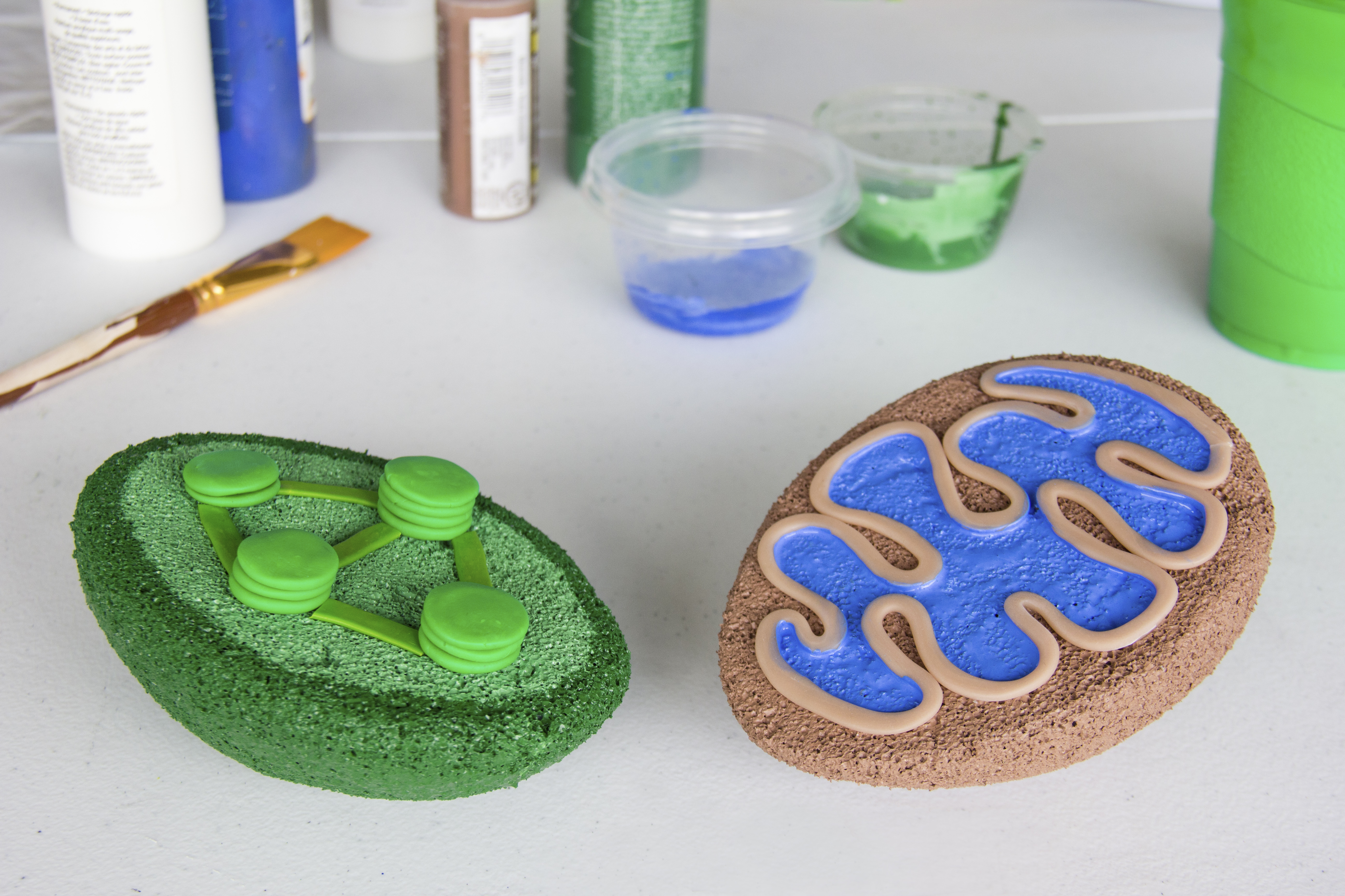 How to build a 3d model for cell biology projects mitochondria how to build a 3d model for cell biology projects mitochondria chloroplast sciencing ccuart Choice Image