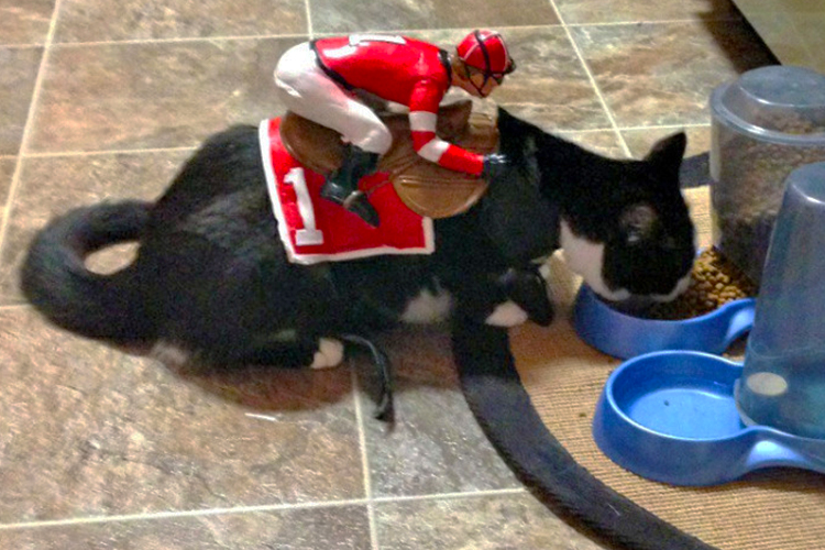 20 Super Diy Able Costumes For Cats Cuteness