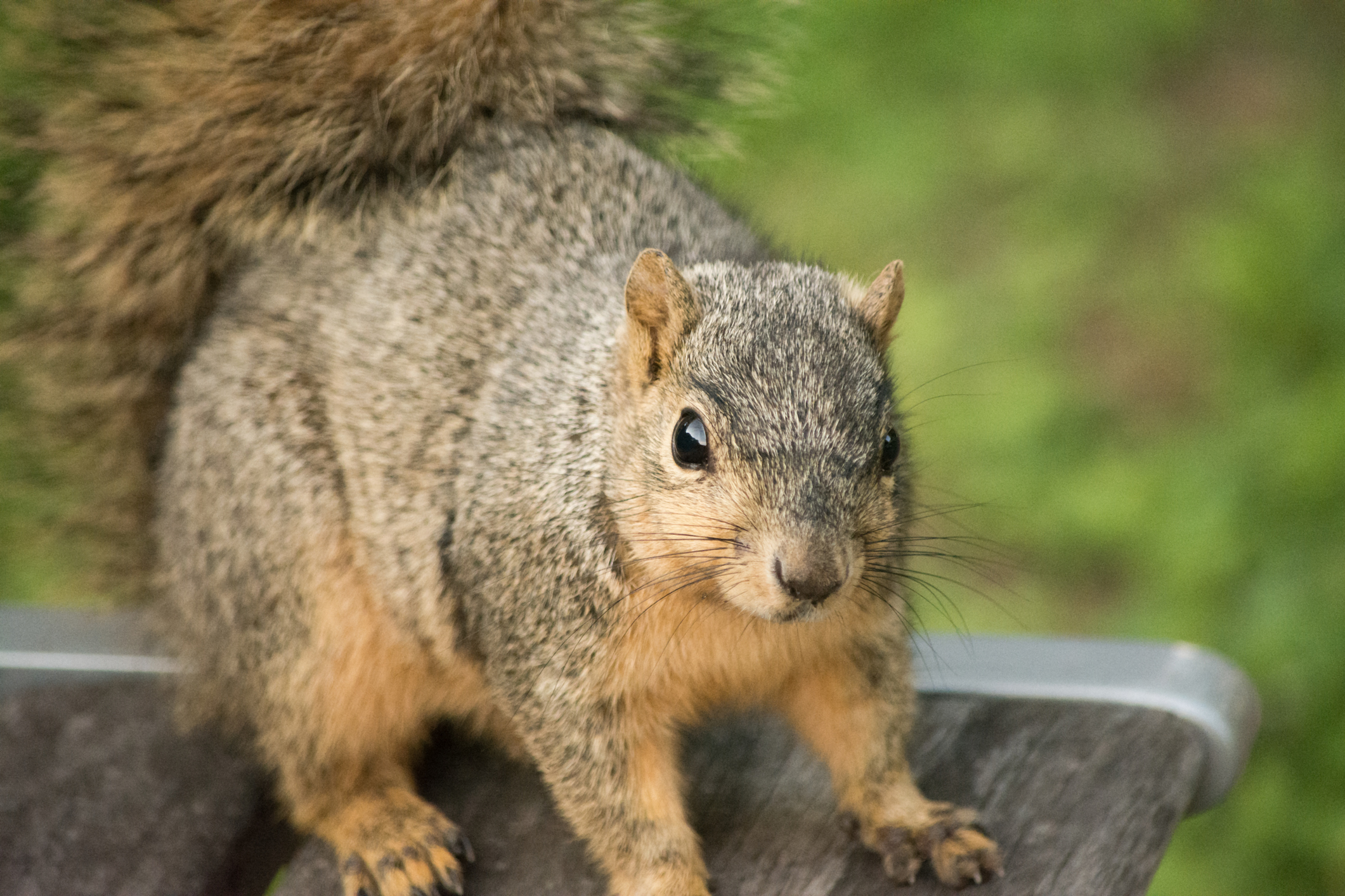 How to Attract Squirrels forecast
