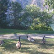 LakeChelan7846