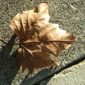 Just a Leaf