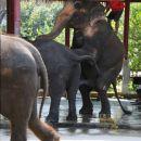 Elefanten -Fun