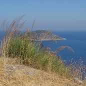 Grass_Greece, Samos 2011