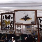 Preserve Insect Sale