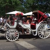 Horse Carriage at Central Park (NYC)