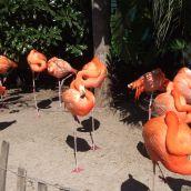 Flamingos at Seaworld (Florida)