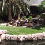 Flamingo Hotel (Habitat)