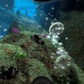 Coral on a Wreck