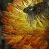 fly on big flower