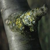 close-up on twig with fungi