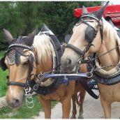 Castle Lednice III. Horses