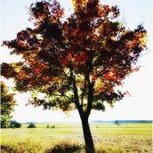 Tree Study II.