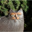 Magic Cat I.