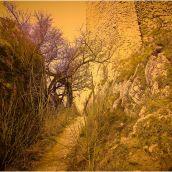Virgins Trail