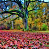 Chateau Garden - Rajec Jestrebi