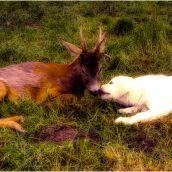 Autumn temporarily friendship