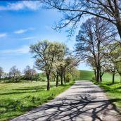 Spring Walk III.
