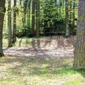 Spring Walk IV. Panorama