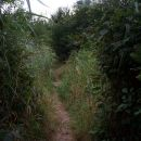 Jungle path on Essex Coast