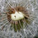 6-ThemelisG-Weed