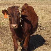 5-MollW-steer