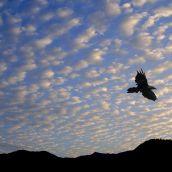 4-StaubJ-Crow Against Sky