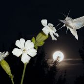 3-GonzalezJF-Moth and moon