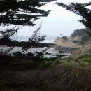 2-ShotsbergerR-Point Lobos Foggy Morning
