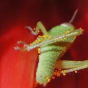 AlfonsoA-Pollen Hunter