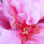 AlfonsoA-My Favorite Flower