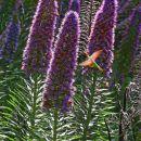 VorobyoffO-01-Hummingbird Heaven
