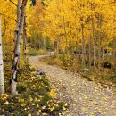 ShetleyA-03-Path-Through-Aspens