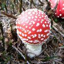 PuhakkaT-3-Storybook Mushroom
