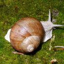 PuhakkaT-1-Storybook Snail