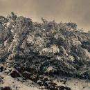 GhahremanifarF-06-Snow