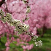 GhahremanifarF-03-Spring