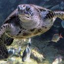 6-Suto-Turtle