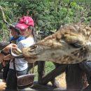 6-HesterF-Feeding the Giraffe