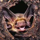 6-BloombergR-Bat's All Folks