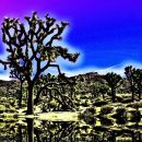 5-StarkmanD -Joshua Tree Reflection