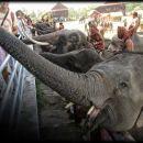 5-HesterF-Elephant Roundup