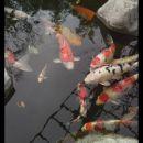 4-HeiserD-Coy Pond