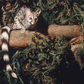 4-BloombergR-Gennet in Tree